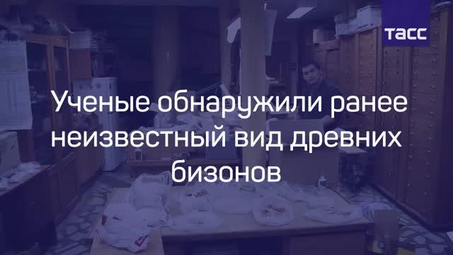Уральские учёные открыли неизвестный доэтого вид бизона— Ископаемая сенсация