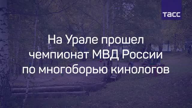 НаУрале закончился всероссийский чемпионат помногоборью кинологов